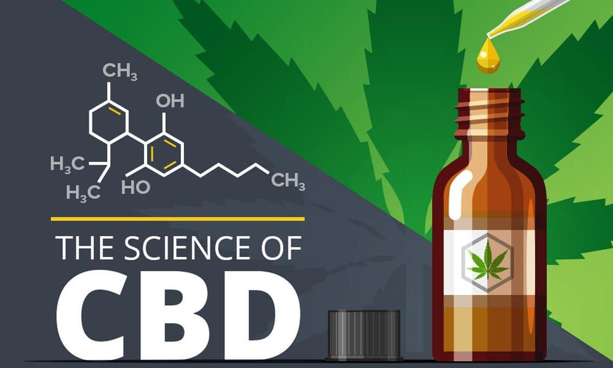 CBD Oil works in the body.